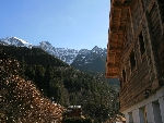 Chalet Orchid -